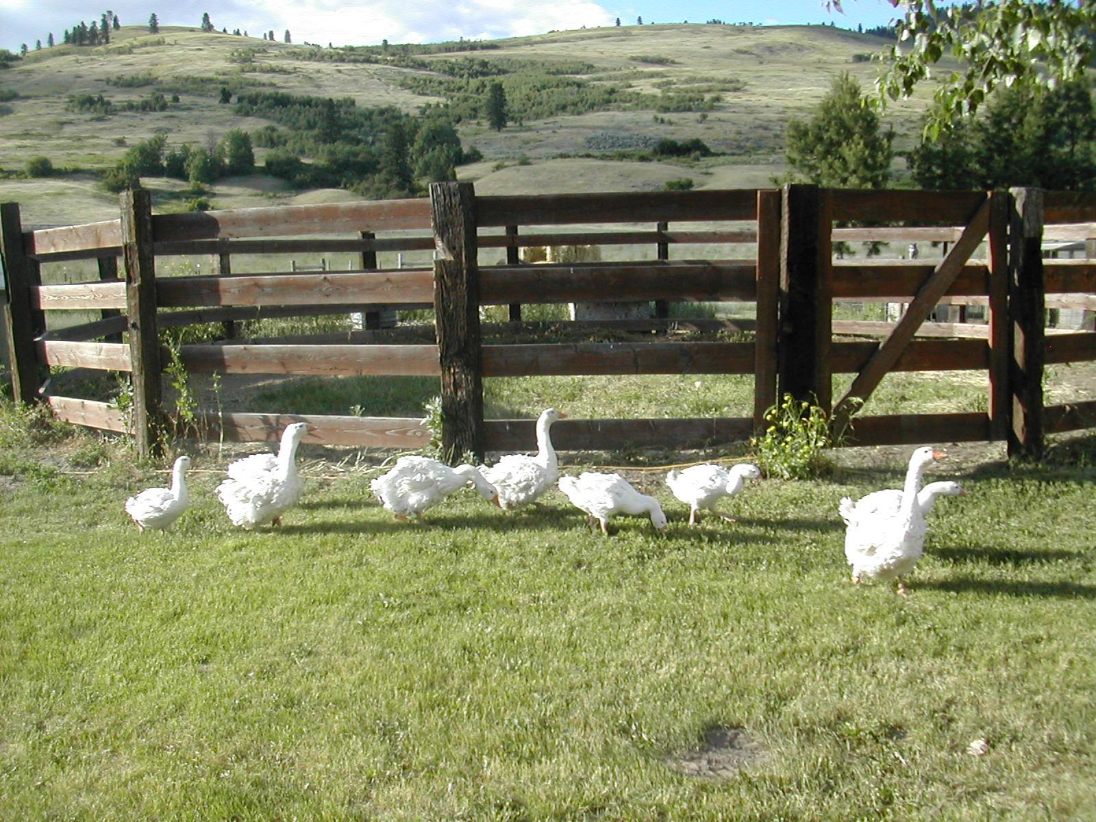 Flock June 2014